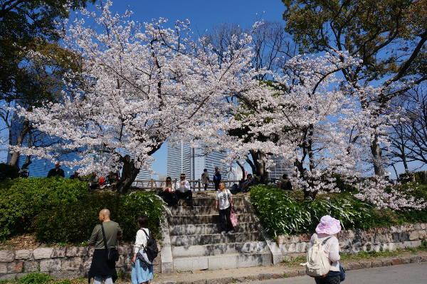 大阪城の桜2018-1