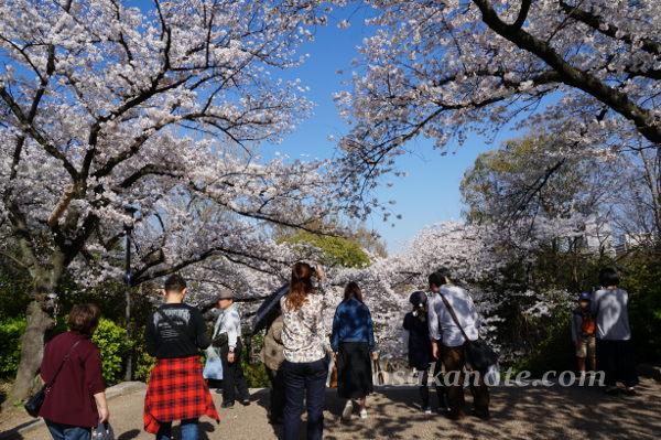 大阪城の桜2018-2