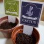 ブログ移転しました&記念の植サボテン