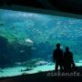 西海国立公園・九十九島水族館「海きらら」行ってきました♪